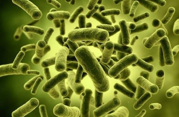 Пищеварительная система человека - интересные факты