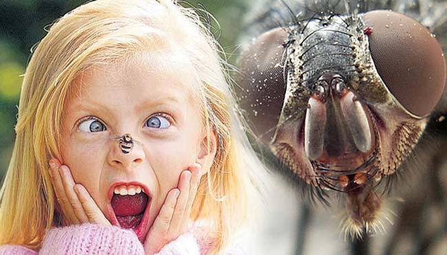 Укусы насекомых. Первая помощь при укусах насекомых.